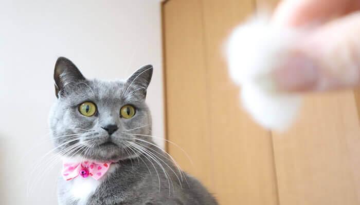 新入り猫の毛玉を見つめる先住猫