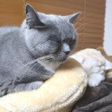 一緒に寝る先住猫と新入り猫
