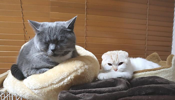 ケージの上で一緒に寝る先住猫と新入り猫
