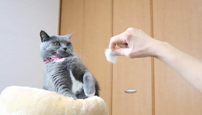 新入り猫の毛玉にビビり先住猫