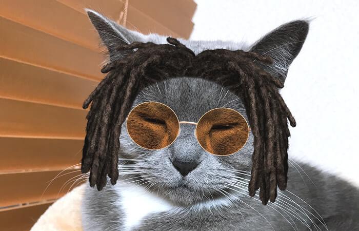 SNOWアプリで遊んだ猫
