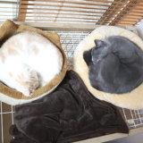 アンモニャイトになる猫たち