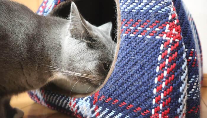 新入り猫レオのベッドの匂いを確認する先住猫モモ