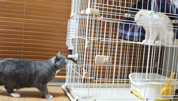 ケージ越しで対面する先住猫と新入り猫