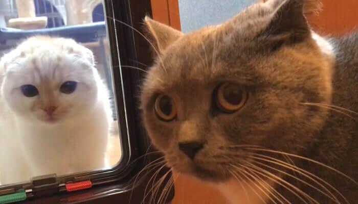 猫ドア越しに先住猫と新入り猫が対面