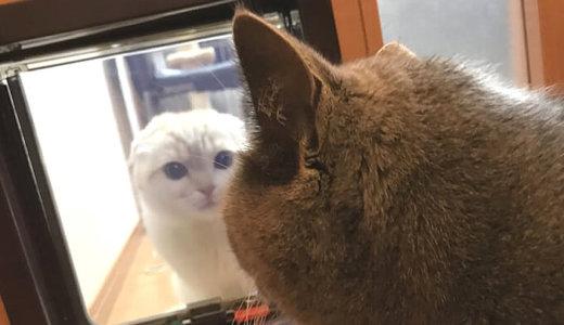 猫ドア越しで対面しちゃった…