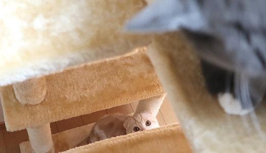 初めての猫パンチで急接近!?