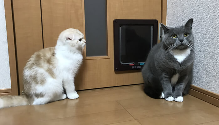 先住猫に近づきたい新入り猫