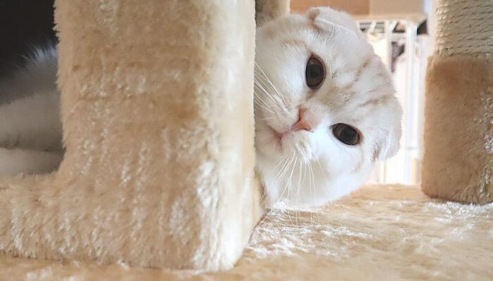 あくびをする寸前の変顔の猫