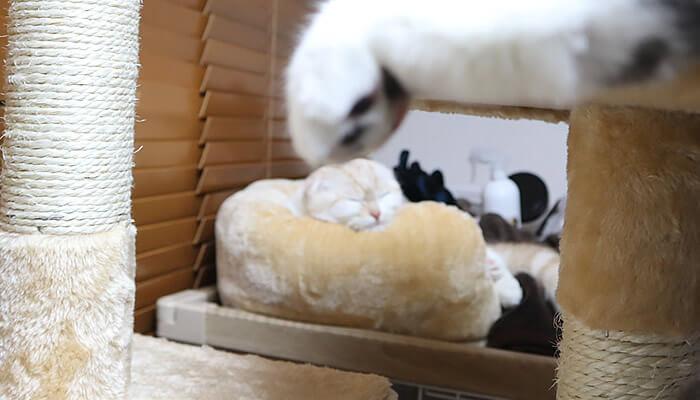 遠近法で新入り猫に猫パンチをする先住猫