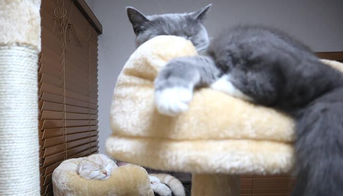 違うベッドで寝る先住猫と新入り猫