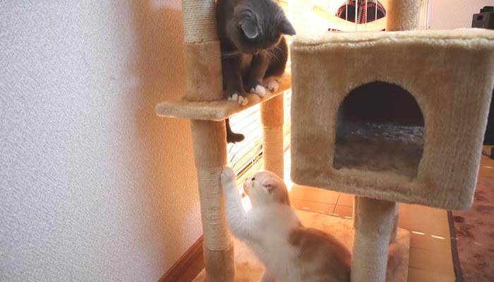 先住猫と新入り猫