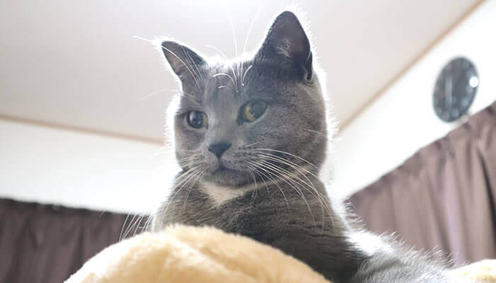 他の猫の気配を感じる先住猫のモモ