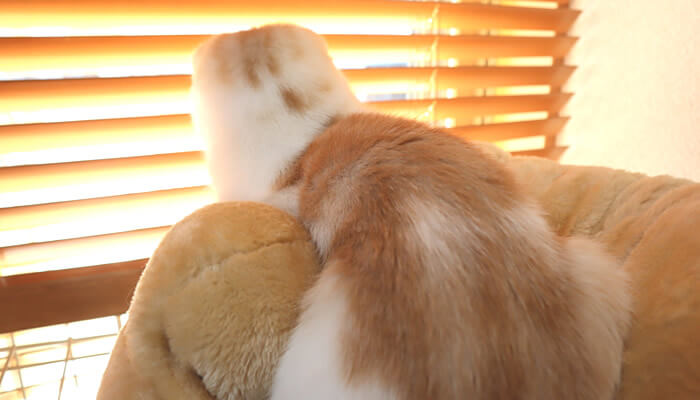 ニャルソックする後ろ姿の猫