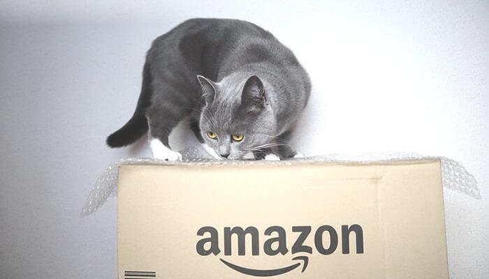 Amazonの箱と猫