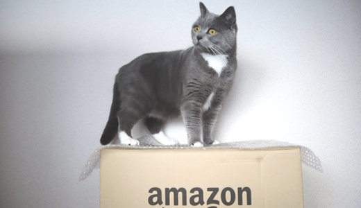 Amazonの箱を取り合う猫たち