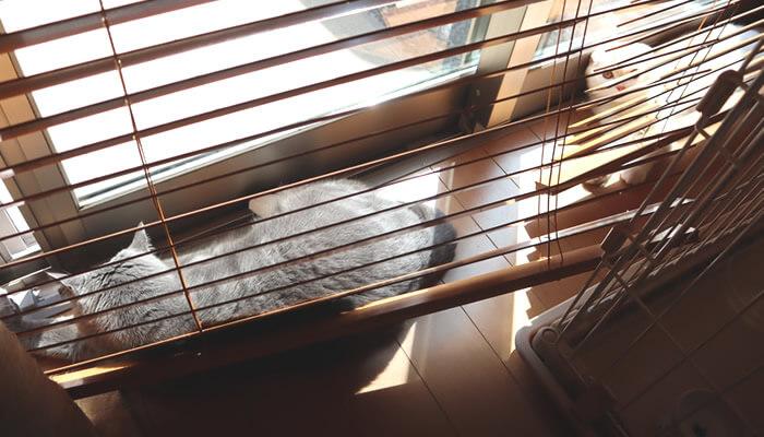 日向ぼっこでニャルソックする先住猫と新入り猫