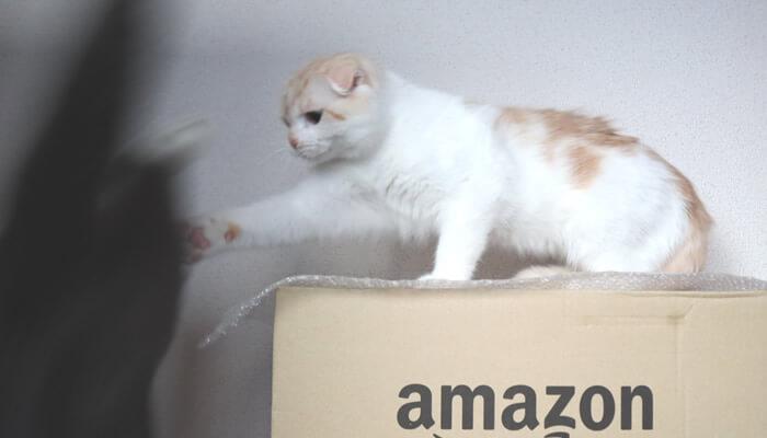 Amazonの箱を取り合う猫