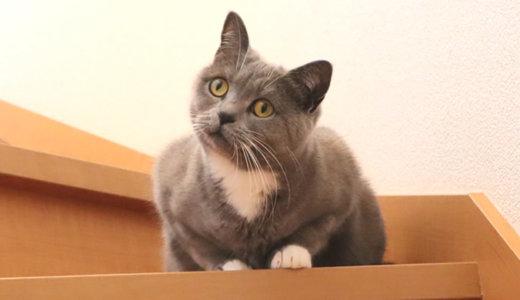 階段から覗いてくる猫