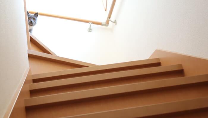 階段の上から覗いてくるブリティッシュショートヘアのモモ