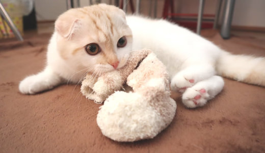 靴下が大好きすぎる猫