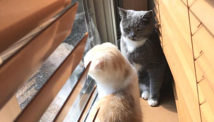日向ぼっこを邪魔される猫