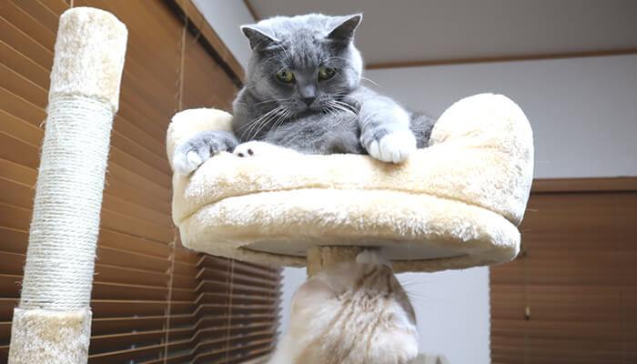 先住猫のしっぽで遊びたい新入り猫