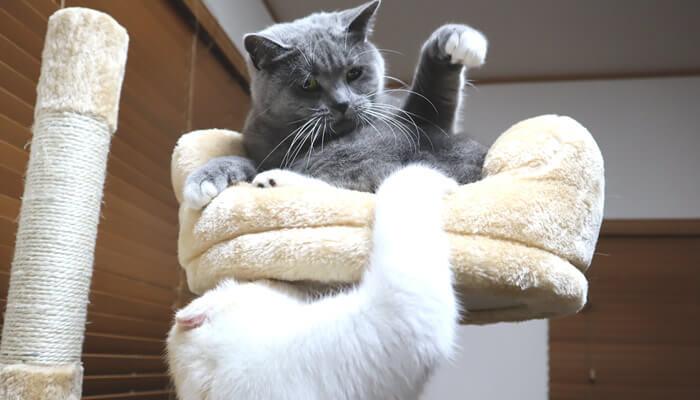 先住猫VS新入り猫