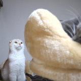 先住猫を見つめる新入り猫