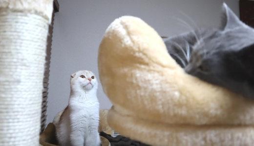 先住猫と遊びたい新入り猫。