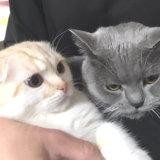 先住猫と新入り猫の意図しないツーショット