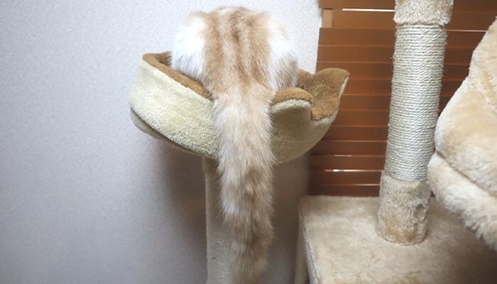 壁の方を向いて寝る猫
