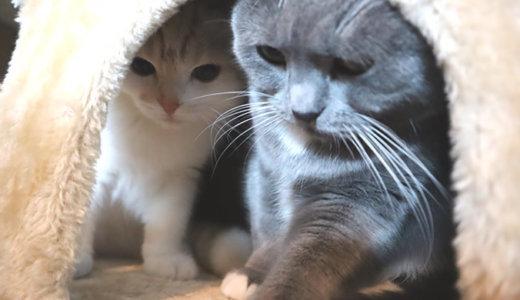 気まずい距離感で硬直状態の猫たち。