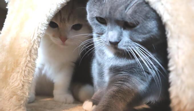 急接近で固まる先住猫と新入り猫