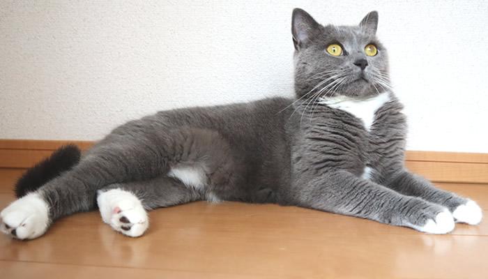 冷たい床でくつろぐ猫