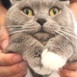抱っこが嫌いな猫