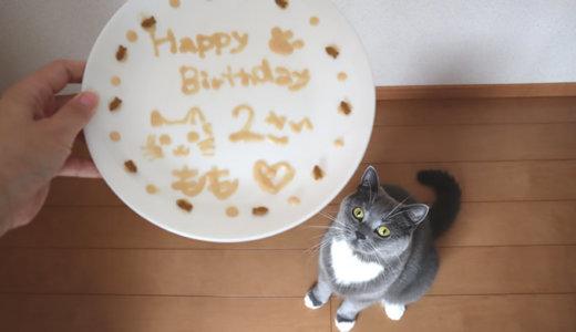 【誕生日記念】2歳の猫の体重測定|ブリティッシュショートヘア