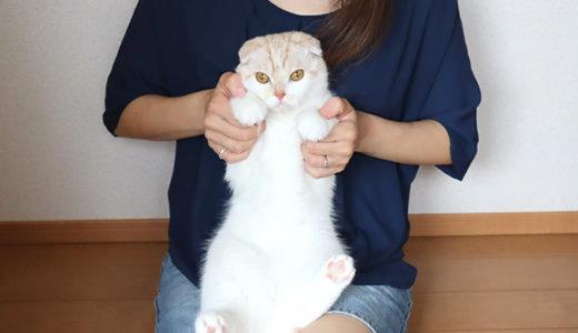 抱っこを嫌がらない猫はぬいぐるみになる巻