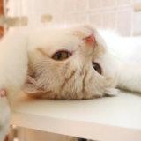 変な寝方の猫